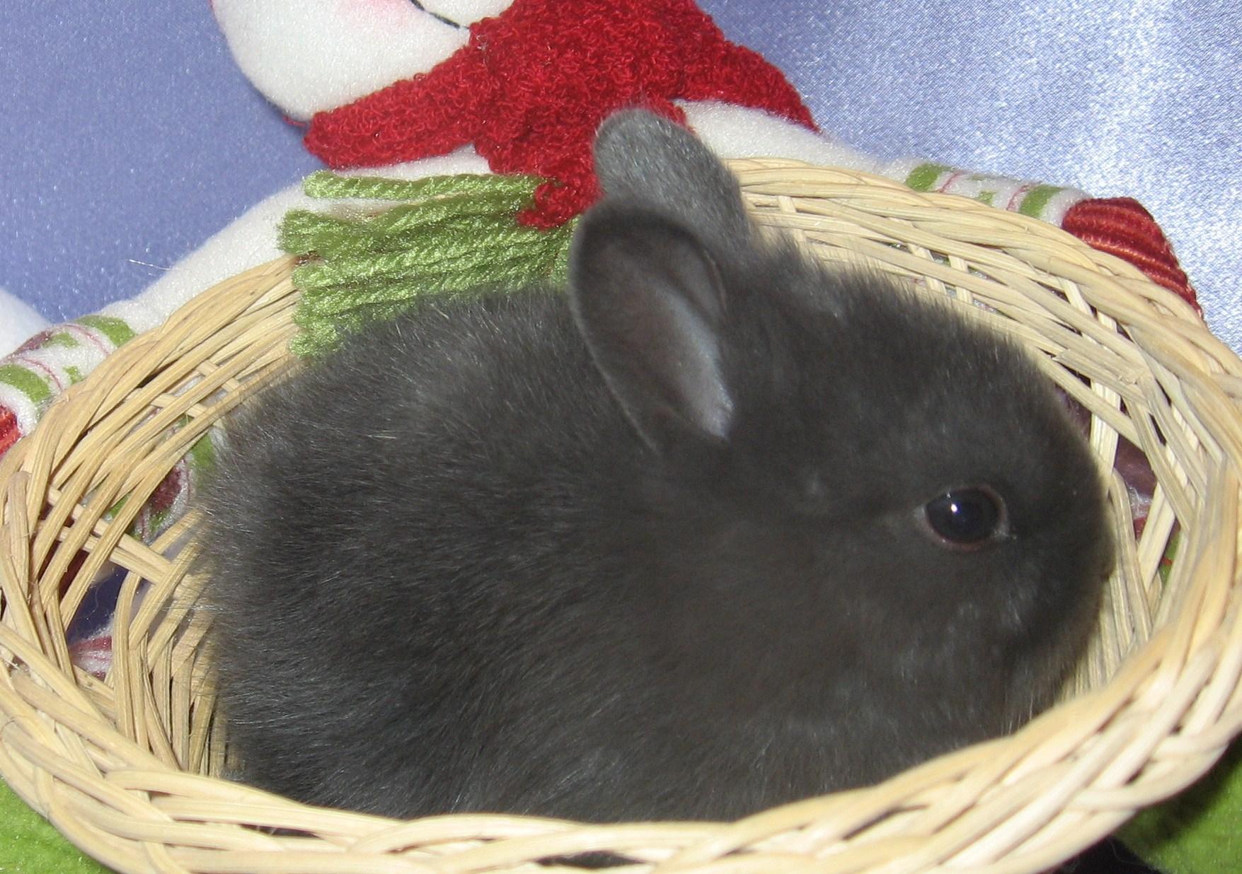 Как кормить декоративного кролика в домашних условиях 253